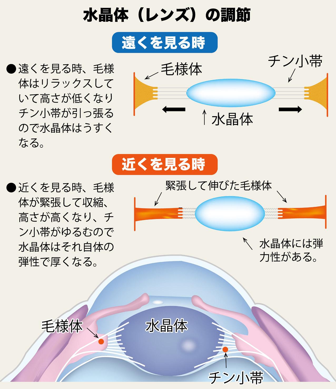 マッサージ 視力 回復